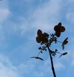 Blätter-Gebilde, Kunstwerk der Künstlerin Sheida Hosseini Mehr
